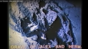 Shallow Graves - Alex and Herman